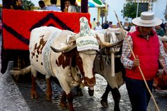 Pilgimage in Dos Hermanas Seville 80 Immagine Stock Libera da Diritti