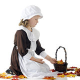 Pilgrim Leaf-Collector. A young elemantary aged Pilgrim girl collecting colorful fall leaves in a basket Stock Image
