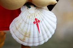 Pilgrim scallop Royalty Free Stock Photography