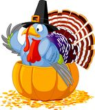 Pilgrim Turkey in pumpkin Royalty Free Stock Images