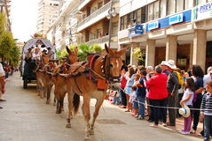 Pilgrims - Andalusian horses en route to el Rocio Royalty Free Stock Photos
