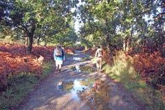 Pilgrims puddles Stock Photo