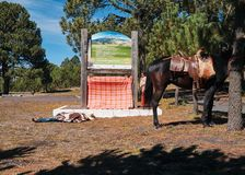 Pilgrims sleeping on ground near his horse royalty free stock image