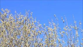 Pilhänge mot blå himmel stock video