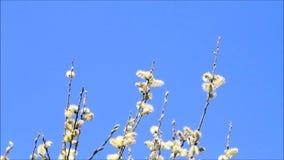 Pilhänge mot blå himmel lager videofilmer