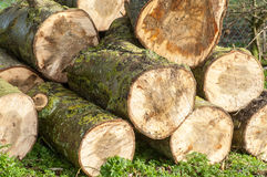 Pilha BRITÂNICA do log do habitat Fotografia de Stock Royalty Free