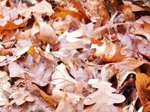 Pilha caída Brown das folhas foto de stock royalty free