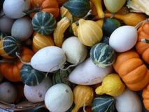 Pilha colorida das abóboras Fotografia de Stock Royalty Free