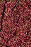 Pilha da cebola vermelha fotografia de stock