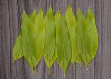 Pilha da folha verde isolada em de madeira Fotografia de Stock