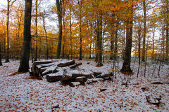 A pilha da lenha é curvada no assoalho da floresta fotografia de stock