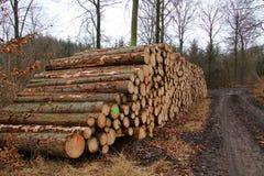 Pilha da lenha de árvores recentemente abatidas imagens de stock