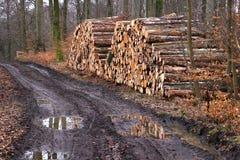 Pilha da lenha de árvores recentemente abatidas fotografia de stock royalty free