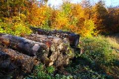 Pilha da lenha de cores festivas do outono Imagens de Stock
