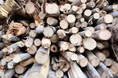 Pilha da lenha feita da árvore dos mortos imagens de stock royalty free
