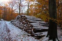 Pilha da lenha na floresta foto de stock royalty free