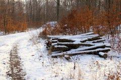 Pilha da lenha pela fuga nevado da floresta imagens de stock royalty free