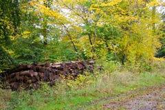 Pilha da lenha vestida em cores do outono Fotografia de Stock Royalty Free