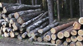 Pilha da madeira video estoque