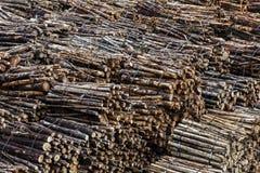 Pilha da madeira Fotografia de Stock Royalty Free