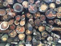 Pilha da madeira Fotografia de Stock