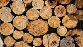 Pilha da madeira Imagens de Stock