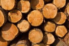 Pilha da madeira após o registo Fotografia de Stock Royalty Free