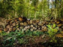 Pilha da madeira cortada e armazenada na floresta Foto de Stock