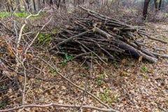 Pilha da madeira cortada e armazenada na floresta fotografia de stock