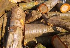 Pilha da madeira desbastada das árvores Imagem de Stock