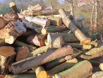 Pilha da madeira desbastada das árvores Fotos de Stock
