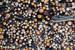Pilha da madeira do fogo Fotografia de Stock