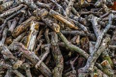 Pilha da madeira, do ramo de árvore e do log foto de stock royalty free