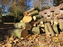 Pilha da madeira fresca do corte Foto de Stock Royalty Free