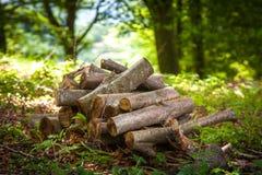 Pilha da madeira na floresta Fotografia de Stock Royalty Free
