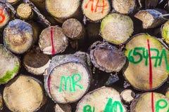 Pilha da madeira na floresta Foto de Stock Royalty Free