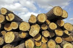 Pilha da madeira no campo de Portugal Fotografia de Stock