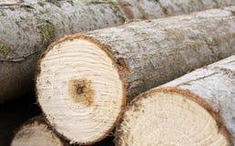 Pilha da madeira serrada Imagem de Stock Royalty Free