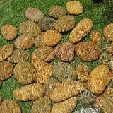 Pilha da pedra do seixo na água Imagem de Stock