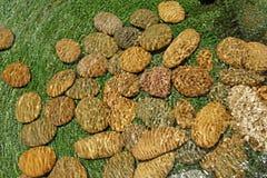 Pilha da pedra do seixo na água Fotografia de Stock Royalty Free