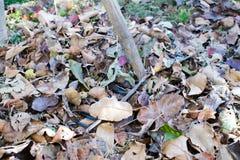 A pilha da queda sae com o ancinho do fã no gramado Fotos de Stock