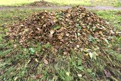 A pilha da queda sae com o ancinho do fã no gramado Imagens de Stock