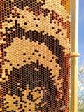 Pilha da rainha e larvea novo imagem de stock royalty free