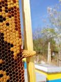 Pilha da rainha e larvea novo fotos de stock royalty free