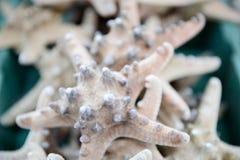 Pilha das estrelas do mar como uma lembrança em uma loja em Miami Foto de Stock Royalty Free
