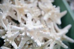 Pilha das estrelas do mar como uma lembrança em uma loja em Miami Imagem de Stock Royalty Free