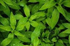 Pilha das folhas Fotografia de Stock