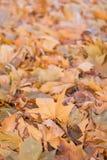 Pilha das folhas caídas amarelas com fundo dos blurres Fundo da folha do outono com borrado para trás imagem de stock