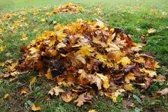 Pilha das folhas caídas no parque do outono Fundo da queda Fotos de Stock