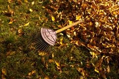Pilha das folhas da queda com ancinho Fotografia de Stock